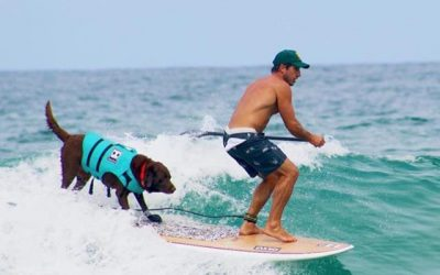 Cão surfista e recordista mundial em Atafona